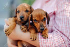 Veterinarias Sin datos  cachorros